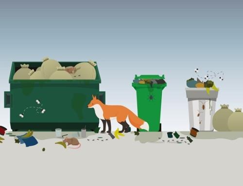 4 лайфхака о том, как ты можешь повлиять на состояние экологии уже сегодня