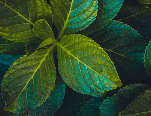 Как стать более экологичным?